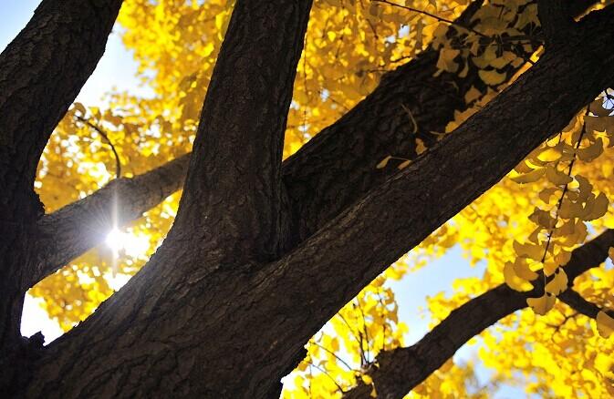 我是一棵秋天的树
